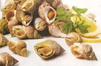 Cuisson des Bulots, les Buccins du Cotentin